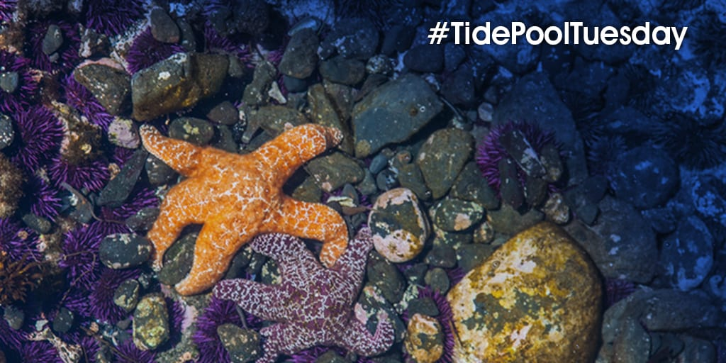 Tide Pool Tuesday: The Bottom Line About Facebook Ads